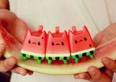 WatermelonCat-Rato-Kim-03.jpg